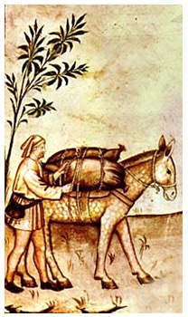 ane_moyen-age_enluminure_Tacuinum_sanitatis_Ibn_Butlan