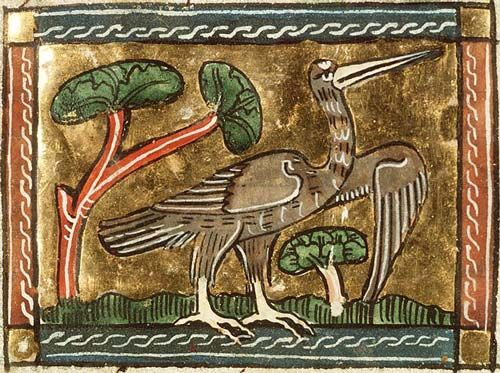 butor-enluminure-bestiaire-monde-medieval-moyen-age