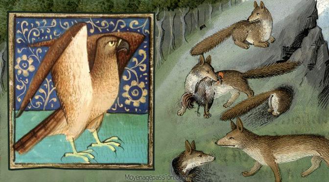 D'un Vorpil et d'un Aigle, une fable de Marie de France